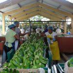 Asociación agropecuaria La Guayas