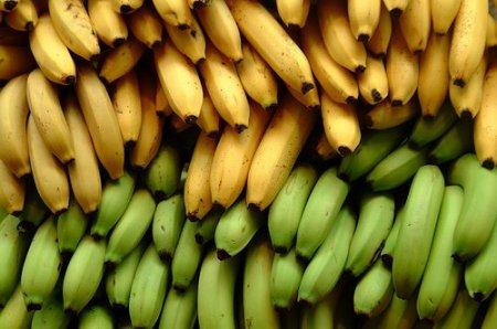 Bananero en Ecuador